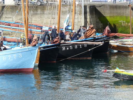 Coquilliers en rade de Brest