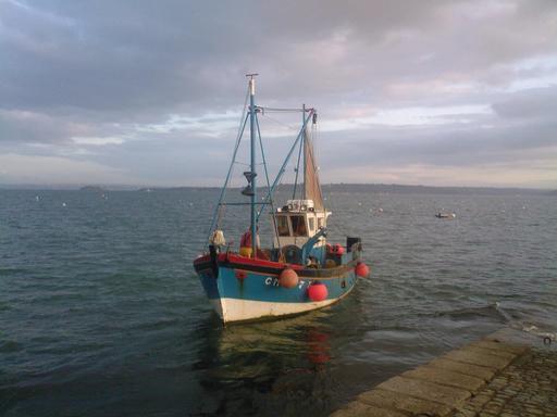 Coquillier de la rade de Brest