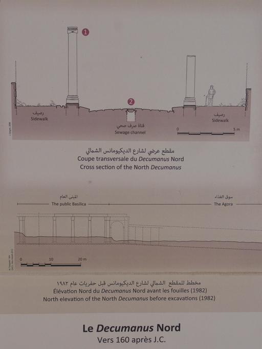 Coupe transversale du Décumanus Nord à Jerash