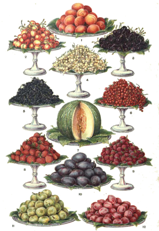 Coupes de fruits