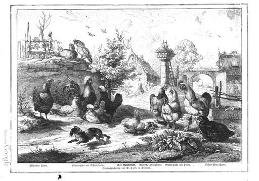 Cour de ferme et pigeonnier en 1860