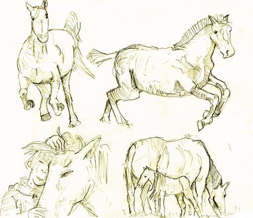 Croquis de chevaux