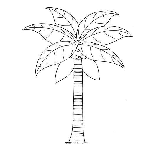 Croquis de cocotier