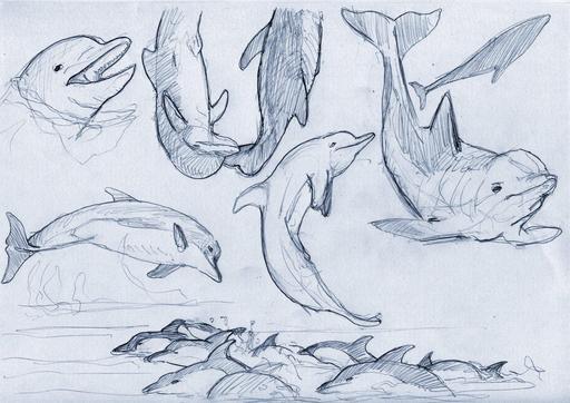 Croquis de dauphins