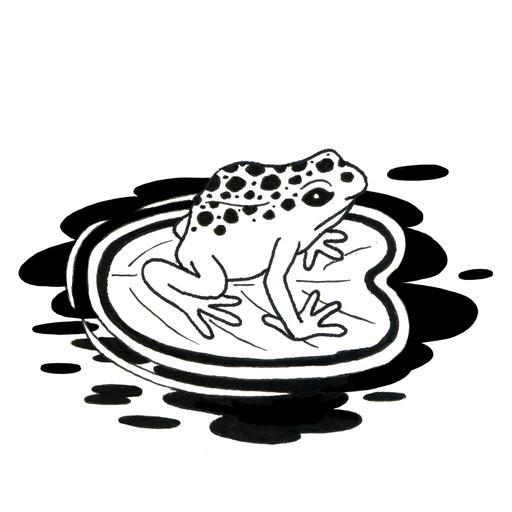 Croquis de grenouille