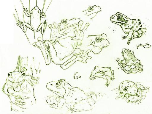 Croquis de grenouilles et de têtards