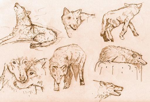 Croquis de loups