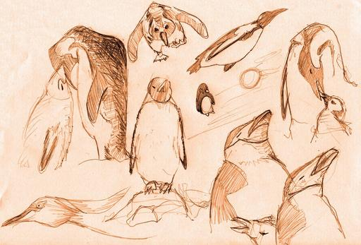 Croquis de pingouins