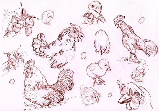 Croquis de poules et poussins