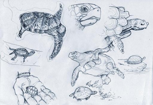 Croquis de tortues