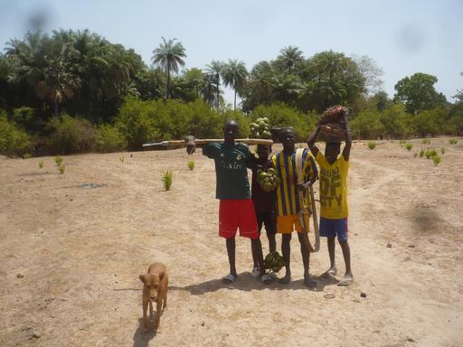Cueillette de fruits sauvages en Casamance