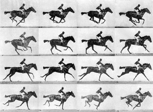 Décomposition du galop d'un cheval