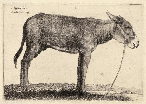 Dessin d'âne de profil