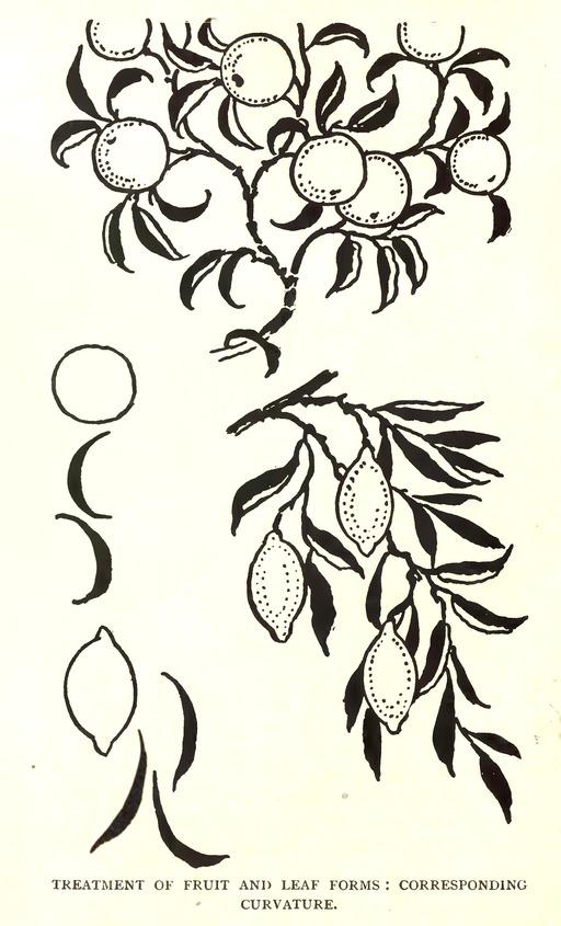 Dessin de branches d'oranger et de citronnier