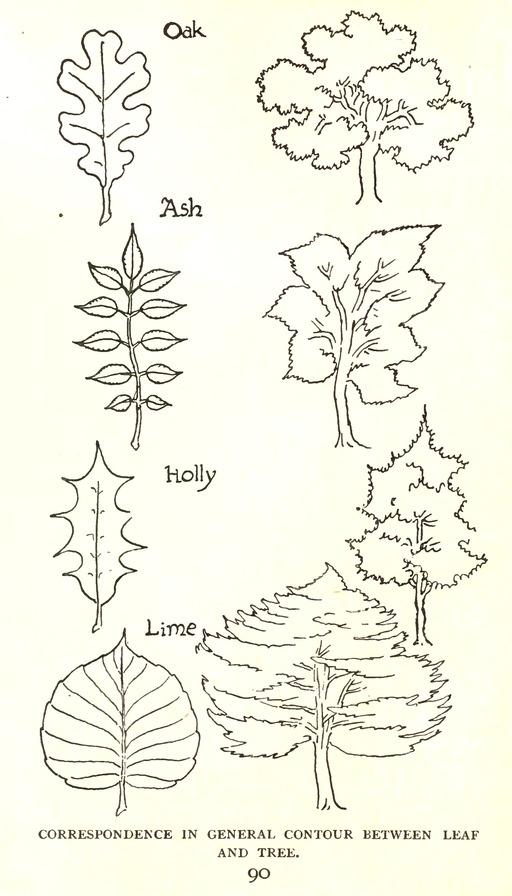 Dessin de feuilles d'arbres