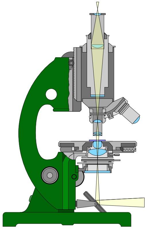 Dessin de microscope