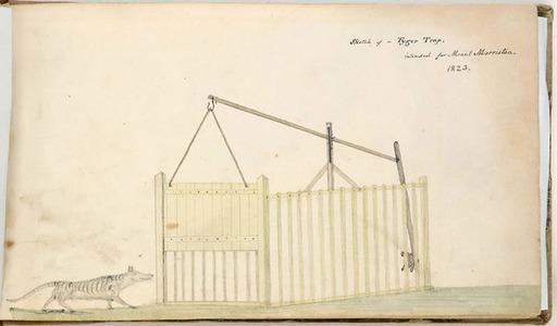 Dessin de piège à tigre en 1823