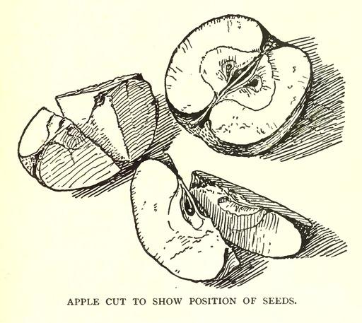 Dessins de pommes et pépins
