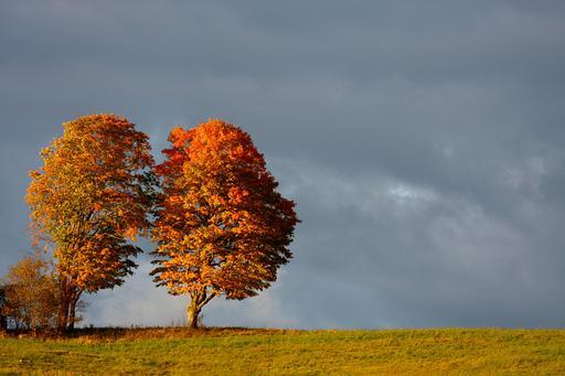 Deux arbres à l'automne