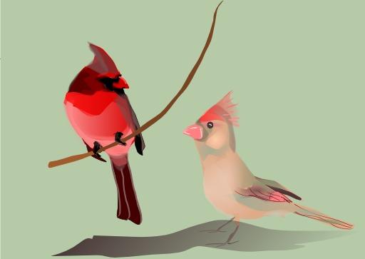 Deux oiseaux amoureux