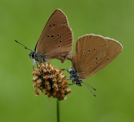 Deux papillons sur une fleur