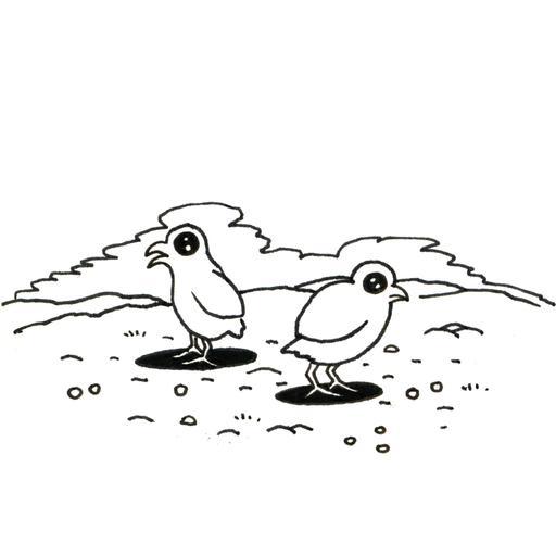 Deux poussins