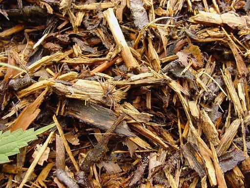 Dome de fourmilière