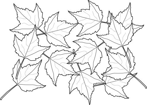 Douze feuilles d'érable