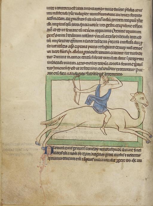 Dromadaire au XIIIème siècle