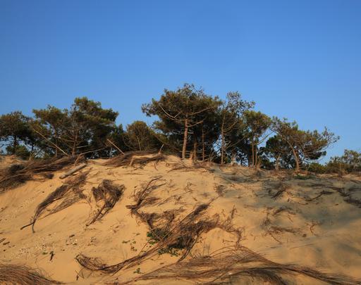 Dune littorale