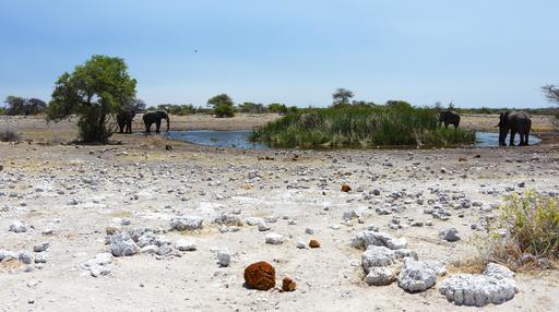Éléphants d'Afrique en Namibie
