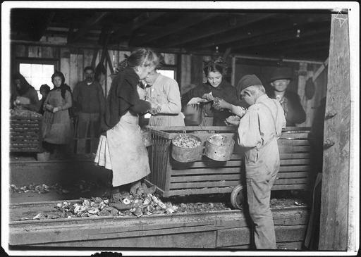 Enfants employés au vidage des huitres en Amérique