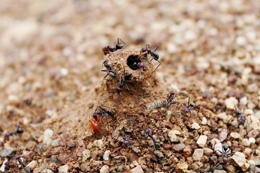 Entrée de fourmilière