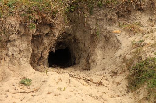 Entrée de terrier de lapinNord Finistère - Dunes de Keremma - 007.JPG