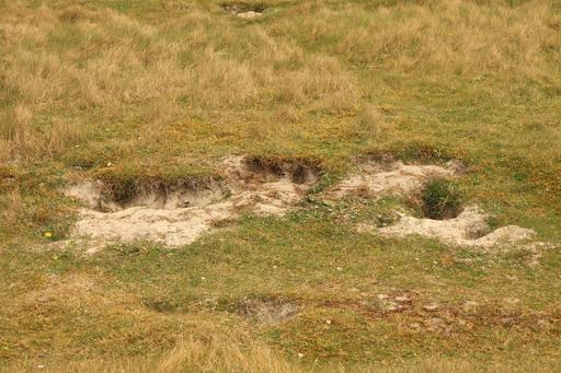 Entrée de terriers souterrains de lapins