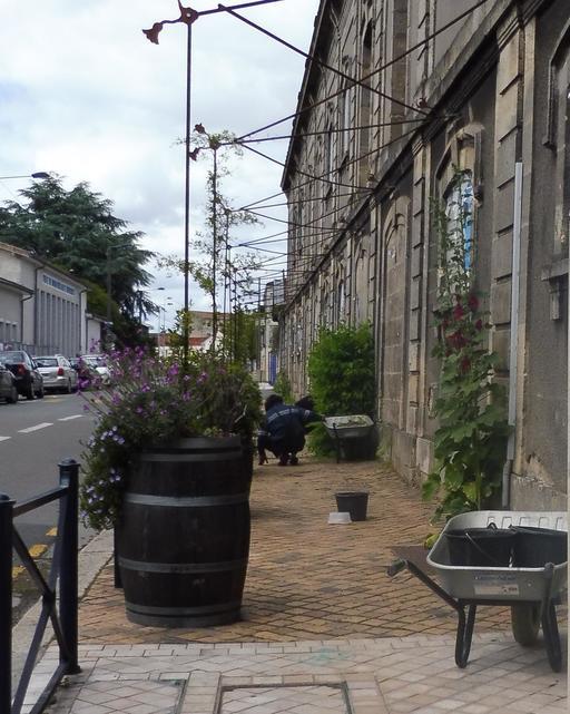 Entretien de trottoir végétalisé à Bordeaux