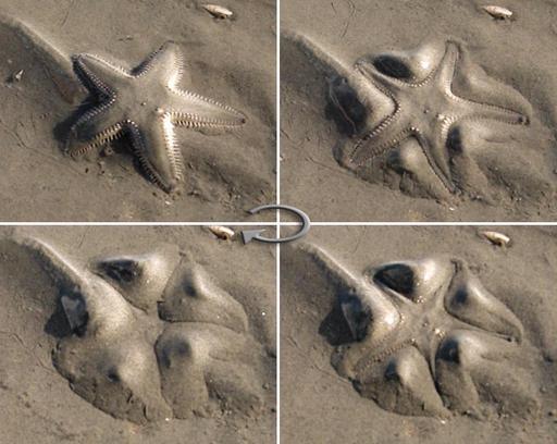 Étoile de mer dans le sable