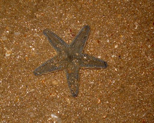 Étoile de mer posée sur le sable