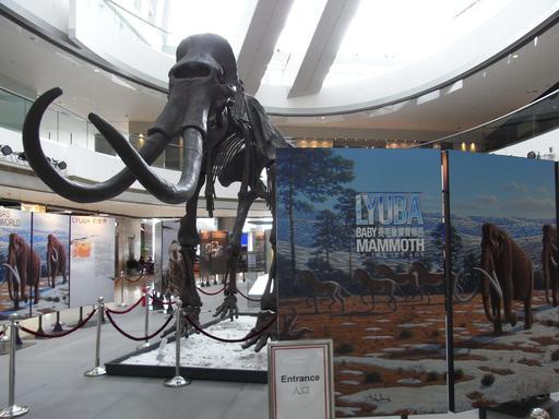 Exposition sur le mammouth Liouba