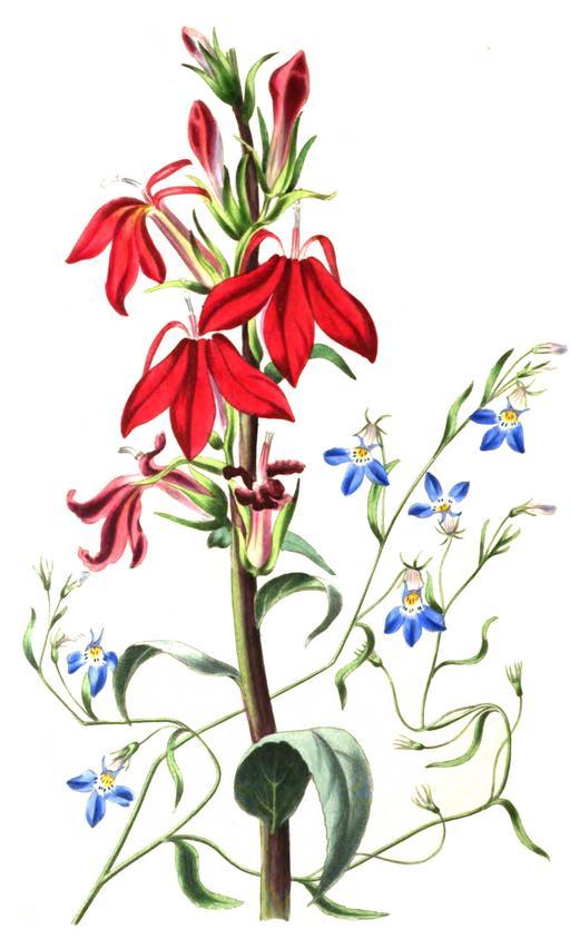 Fantaisie florale en 1836