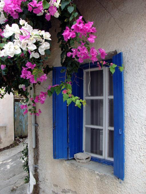 Fenêtre et bougainvilliers