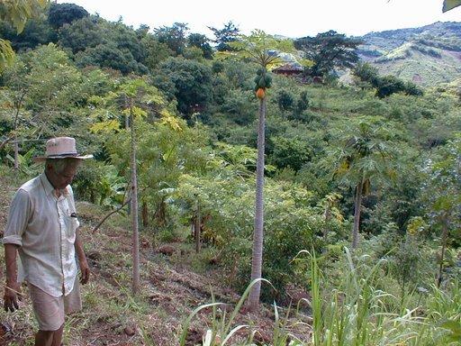Ferme au Honduras