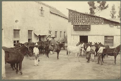 Ferrage des mules au Mexique