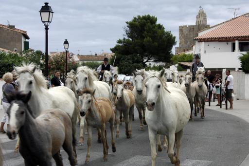 Fête du cheval de Camargue en juillet 2011