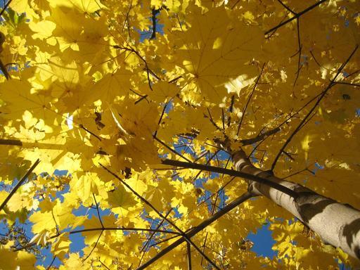 Feuillage d'automne