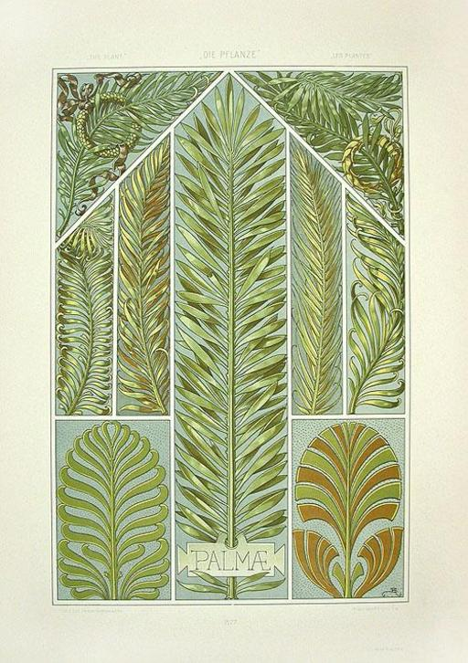 Feuilles de palmier : PALMAE