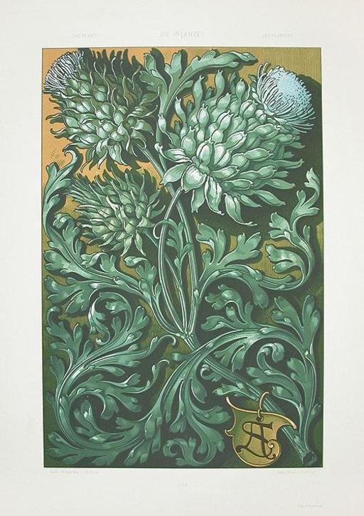 Fleurs d'artichauts