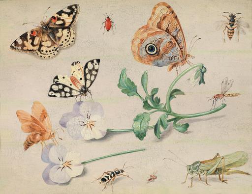 Fleurs et insectes en 1679