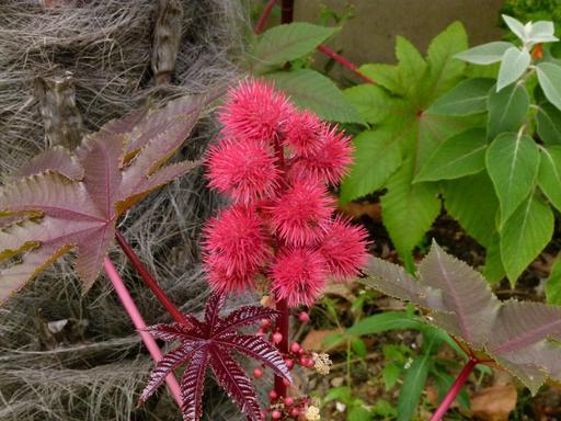 Fleurs inconnues au Jardin Agronomique Tropical de Paris