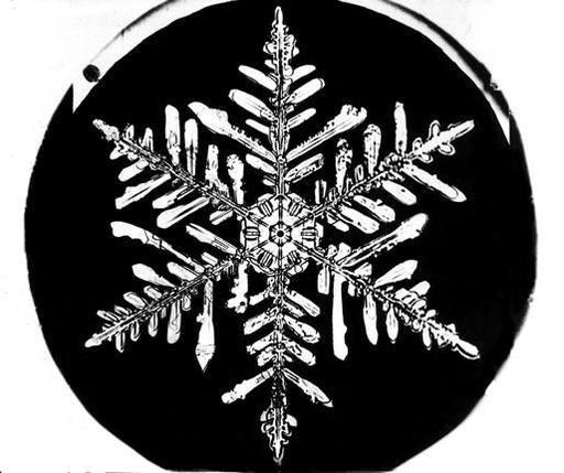 Flocon de neige de Bentley 13